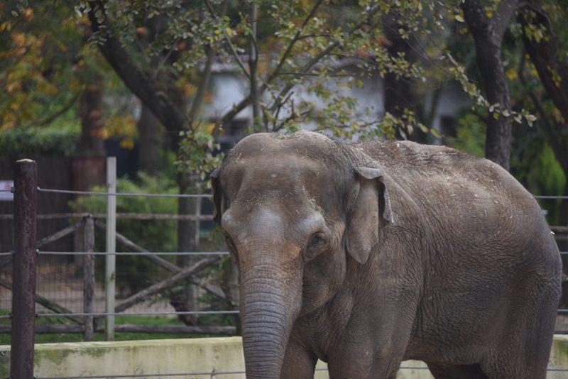 "L'elefantessa ""Mya"""