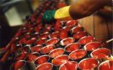 L'export dell'industria del pomodoro