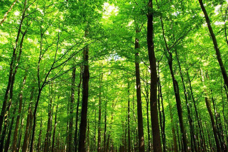 L'impegno ambientale del Gruppo Tecnocasa continua