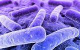 L'intestino umano  si è adattato a inquinanti e antibiotici