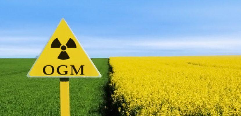 L'Italia notifica all'UE la richiesta di divieto coltura OGM