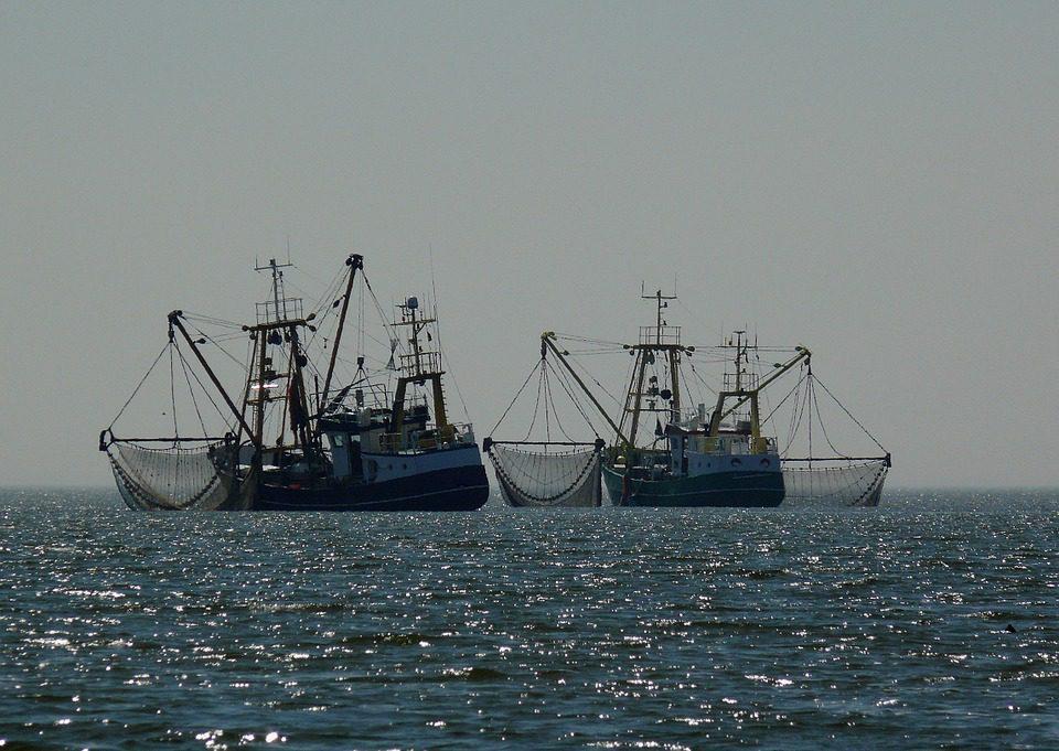 L'UE per la qualità nella pesca
