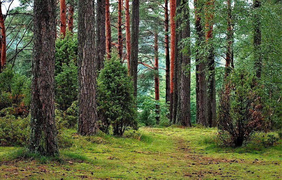 La bio-economia delle foreste