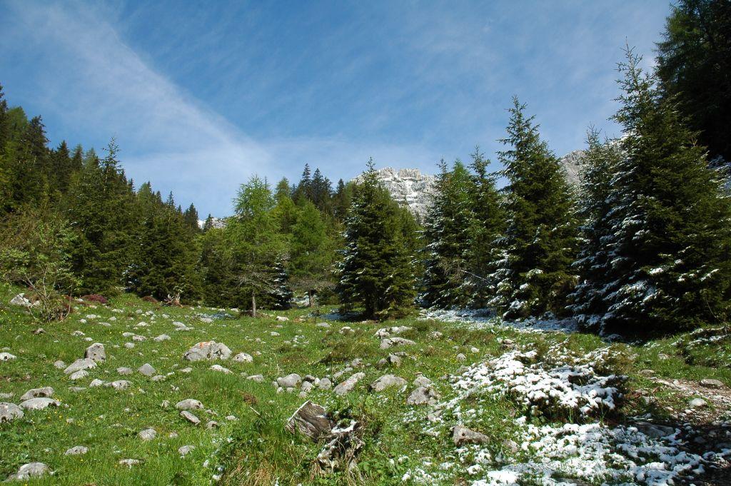 La biodiversità va protetta