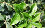 La bioeconomia dei rifiuti organici e delle biomasse