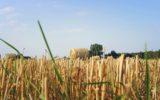 La Campania e le nuove proposte agricole