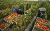 La Cia-Agricoltori Italiani commenta il Disegno di legge sul caporalato