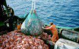 La Commissione Europea lancia la nuova campagna pesca