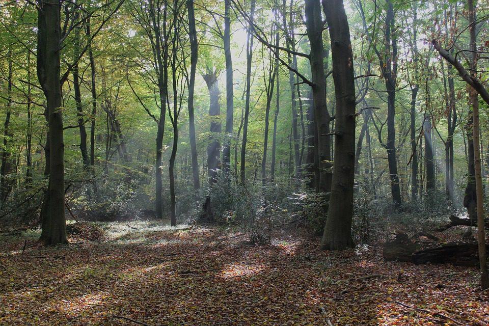 La crescita della superficie dei boschi