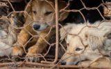 La cruenta strage del Festival di Yulin