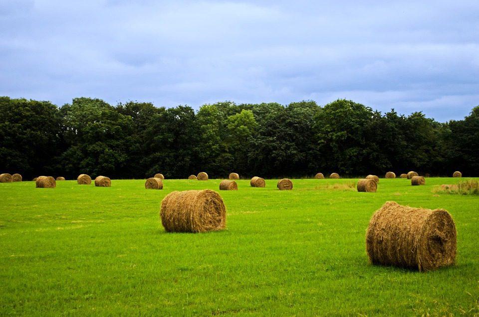 La deflazione mette giù l'agricoltura