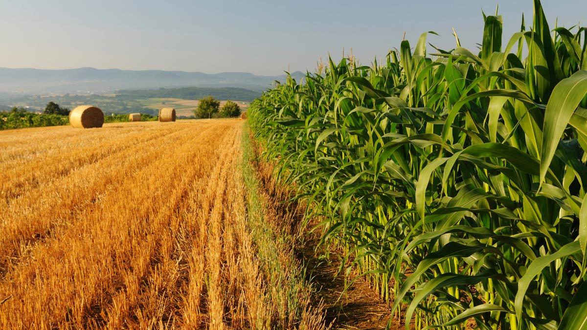 La deflazione pesa sull'agricoltura