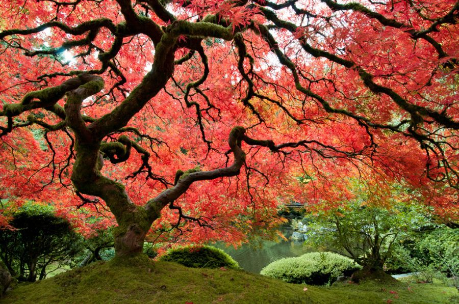 La festa dell'albero