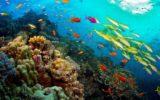 La Giornata Mondiale degli Oceani per il WWF