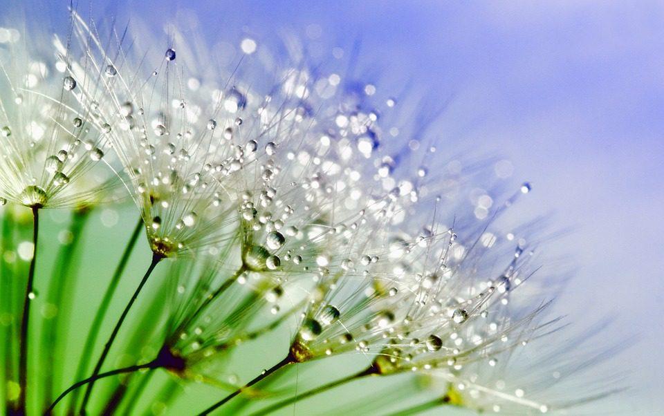 La natura aiuta l'umore