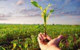 La ricerca per l'agricoltura biologica e biodinamica: una visione di insieme