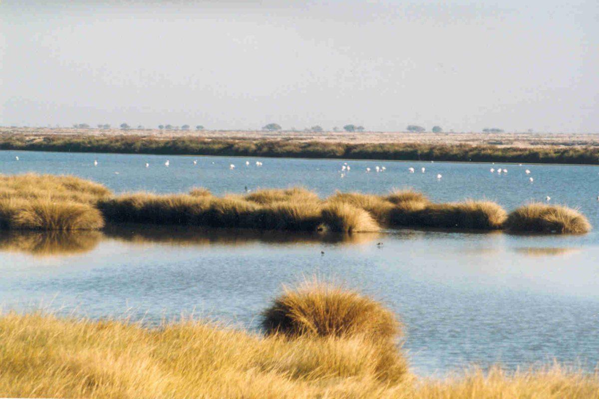 La siccità colpisce il Coto Doñana