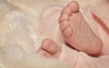Latte d'asina: alimento ideale per i neonati prematuri