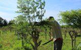 Lavoro: occupazione agricola in rialzo dopo EXPO