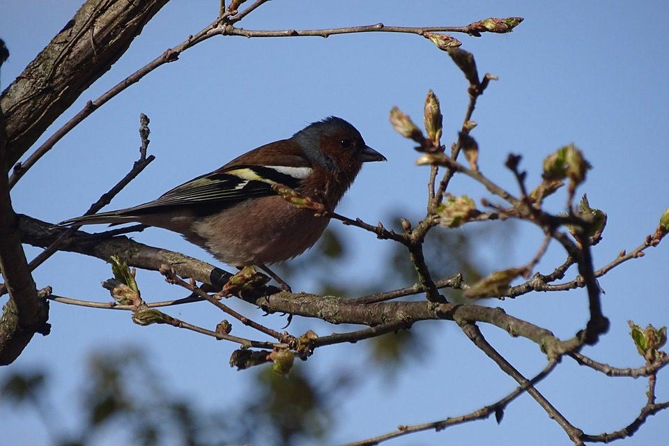 Le associazioni lanciano una petizione per salvare gli uccellini