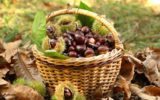 Le castagne: una salutare bontà