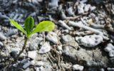 Le cause del degrado del suolo