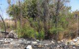 Le proprietà magnetiche dei licheni per contrastare l'inquinamento atmosferico