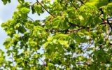 Le sostanze inquinanti ambientali e l'artrite reumatoide