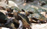Le zone marine italiane preferite dalle tartarughe