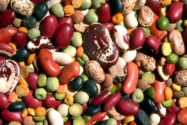 Legumi: benefici nutrizionali