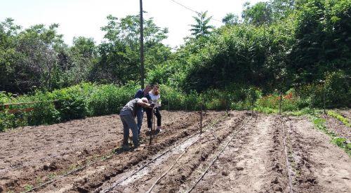 Lo studio delle caratteristiche nutrizionali del pomodoro