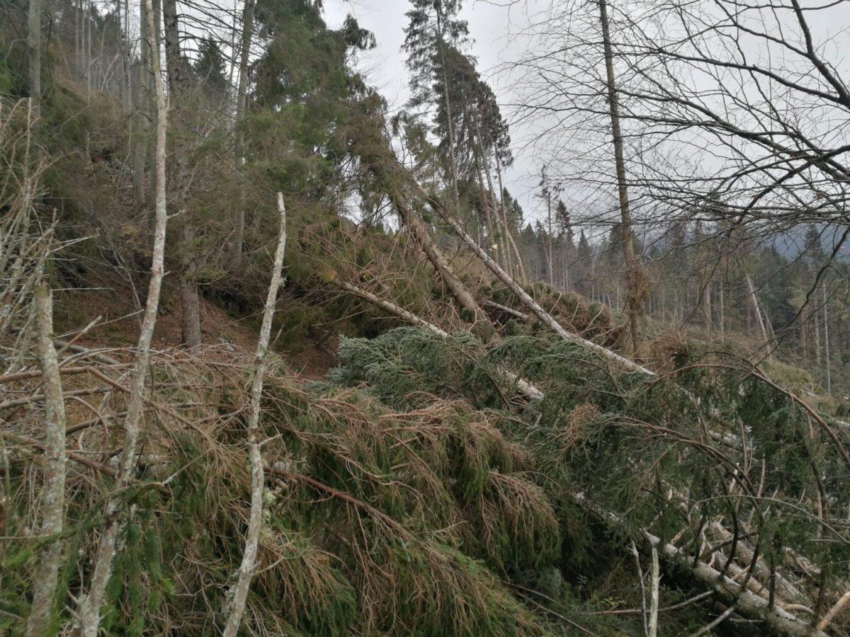 Maltempo: foreste italiane devastate da vento di oltre 140 km/h