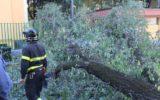 Maltempo: migliaia di alberi abbattuti dal vento