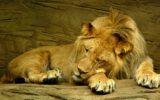 Mancanza di sonno e irritabilità