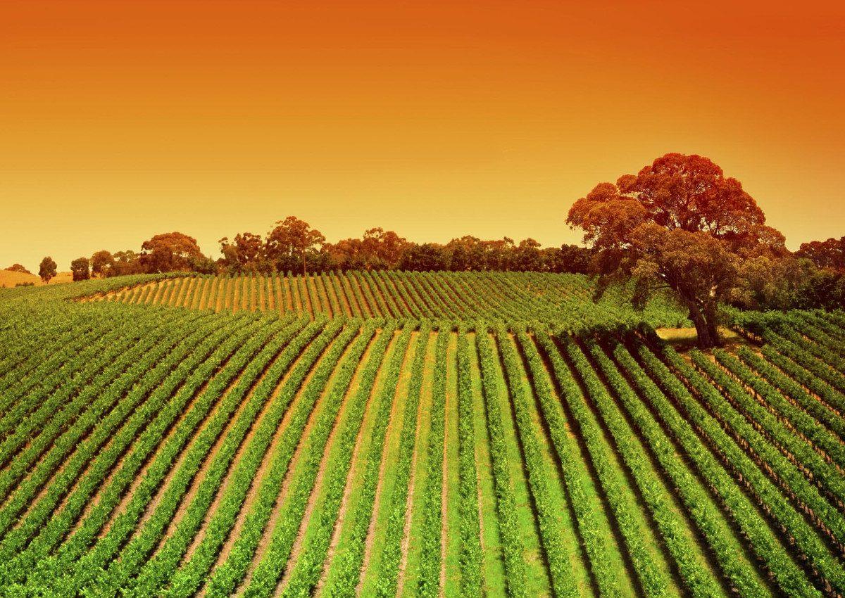 Mercati contadini: accordo Fao Coldiretti