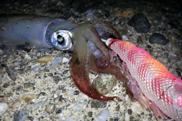 Meteo e Pesca