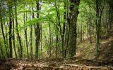 Migliorare la gestione delle foreste e del suolo dell'UE