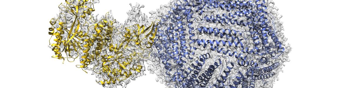 Nanoparticelle per i farmaci antitumorali