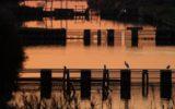 Navigazione fluviale e birdwatching: 2019 eletto anno del turismo lento