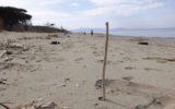 No ai bicchieri e ai piatti di plastica sulle spiagge