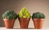 No ai brevetti di piante ottenute con tecniche tradizionali
