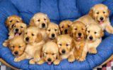 No alla vendita dei cuccioli nei negozi in Gran Bretegna