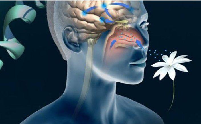 Nuova luce sulla codifica degli odori a livello cerebrale
