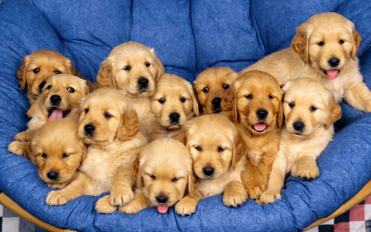 Nuova proposta di legge in Inghilterra: no ai cuccioli venduti dai negozi