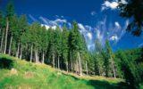 Nuove applicazioni nel settore forestale