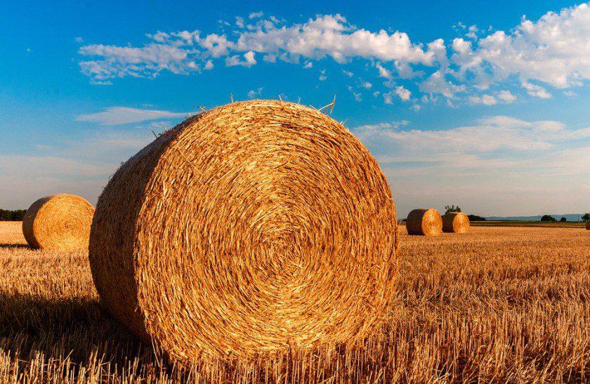Nuovi bandi per l'agricoltura campana