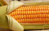 Nuovi sequestri per gli alimenti OGM