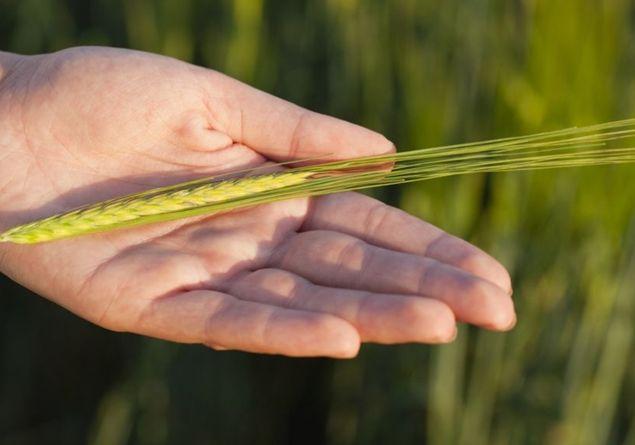 Nuovo rapporto ONU sulla nutrizione nel mondo