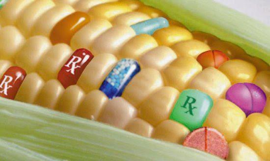 OGM : con l' Italia vietano la coltivazione altri 18 paesi UE