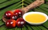 Olio di palma pericoloso per la salute